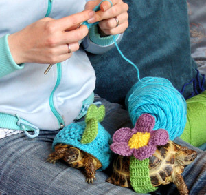 4_Tortoise_Jumpers